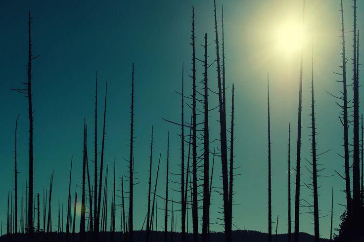 Остров Боуэн Bowen Island — Ничего особенного в этом озере нет кроме, разве что, выжженого леса на дальнем его берегу.