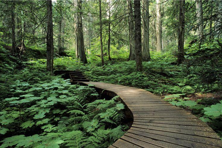 Forest Trail Mount Revelstoke