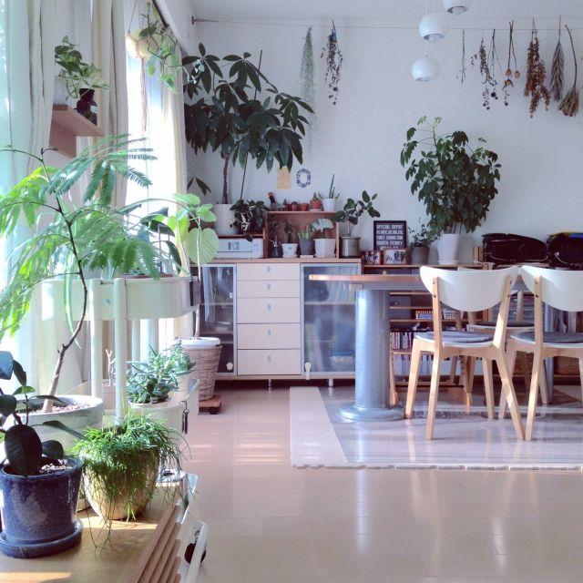 グリーンのある暮らし/こどもと暮らす。/観葉植物/植物/ドライフラワー/無印良品…などのインテリア実例 - 2015-08-21 19:22:07 | RoomClip(ルームクリップ)