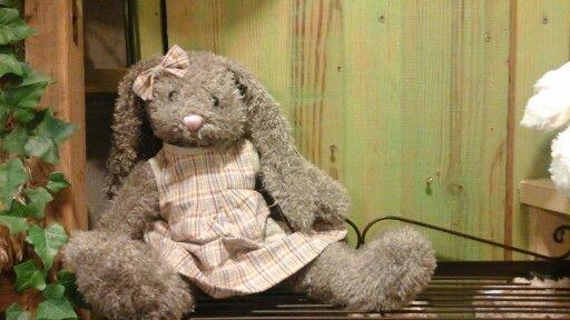 Rabbit le lapin