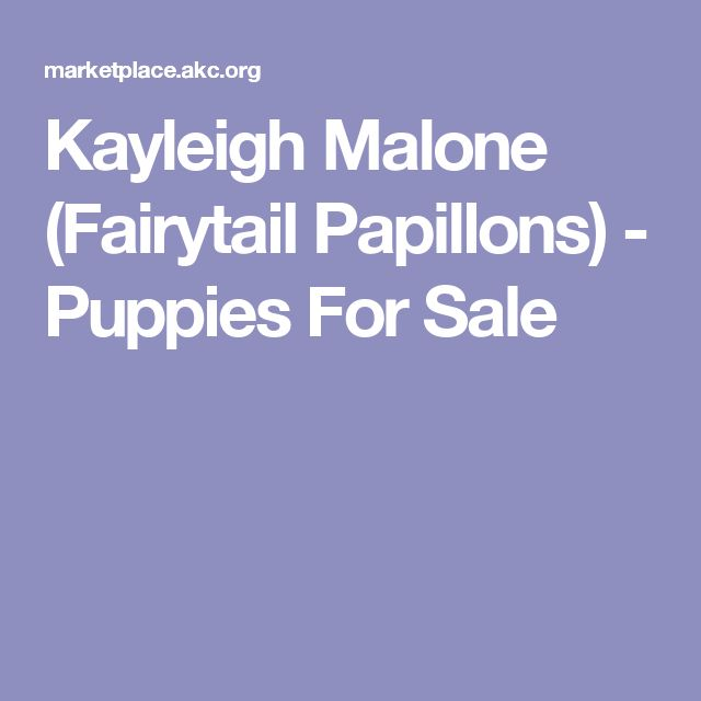 Kayleigh Malone (Fairytail Papillons) - Puppies For Sale