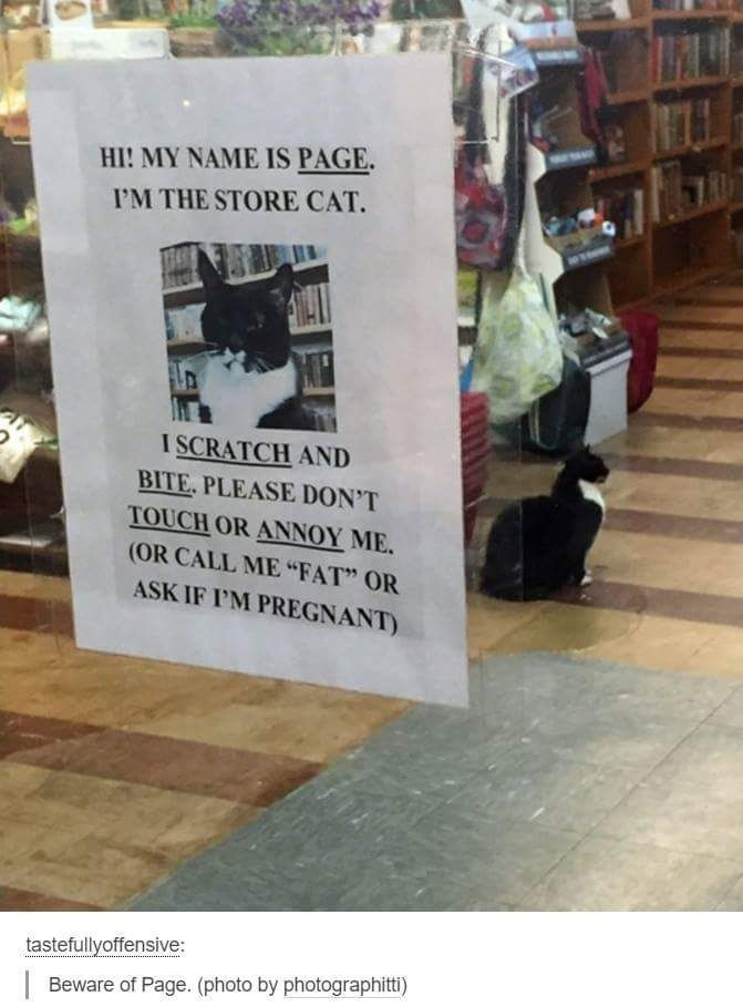 The store cat