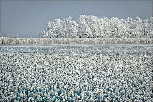 Kwitnący lód na Wigrach, Suwalszczyzna, Polska. Blooming ice on Wigry Lake, Poland