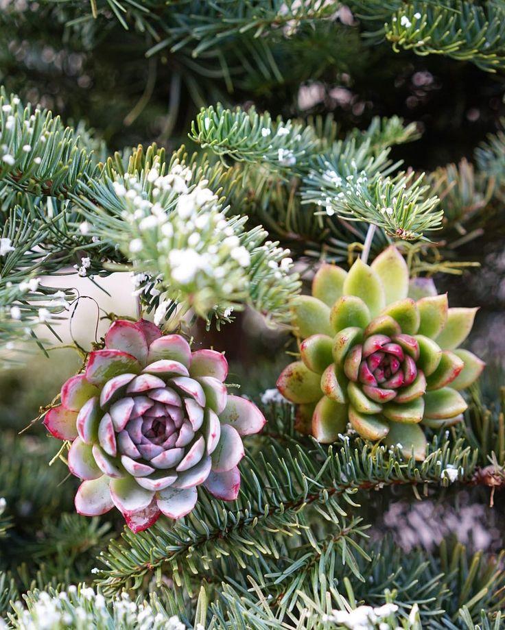 Succulent Ornaments by Dalla Vita