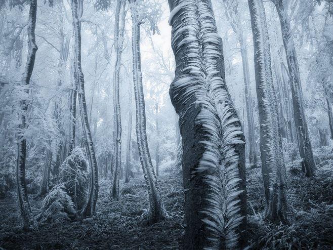 İçinde Kaybolmak İsteyeceğiniz En Gizemli Ormanlar - Beskydy Dağları, Çek Cumhuriyeti