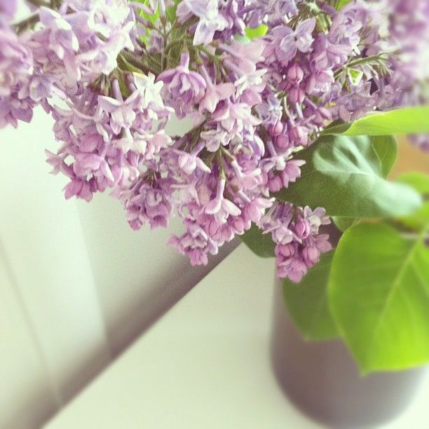 ✕ From my Instagram: Beautiful and fragrant blossoms from the garden / #living #home #flowers: Fragrant Blossoms, Lilacs Smells, Delight Floral, Friends Flower, Pretty Pictures