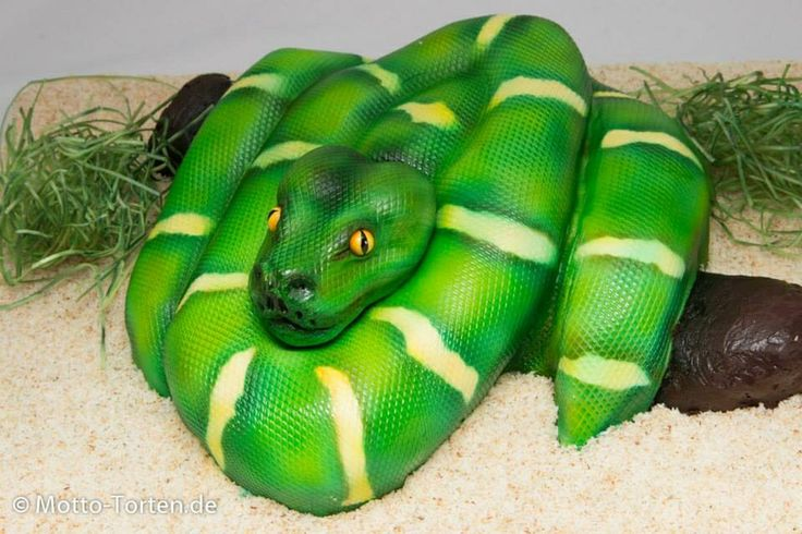 Snake cake / slang taart
