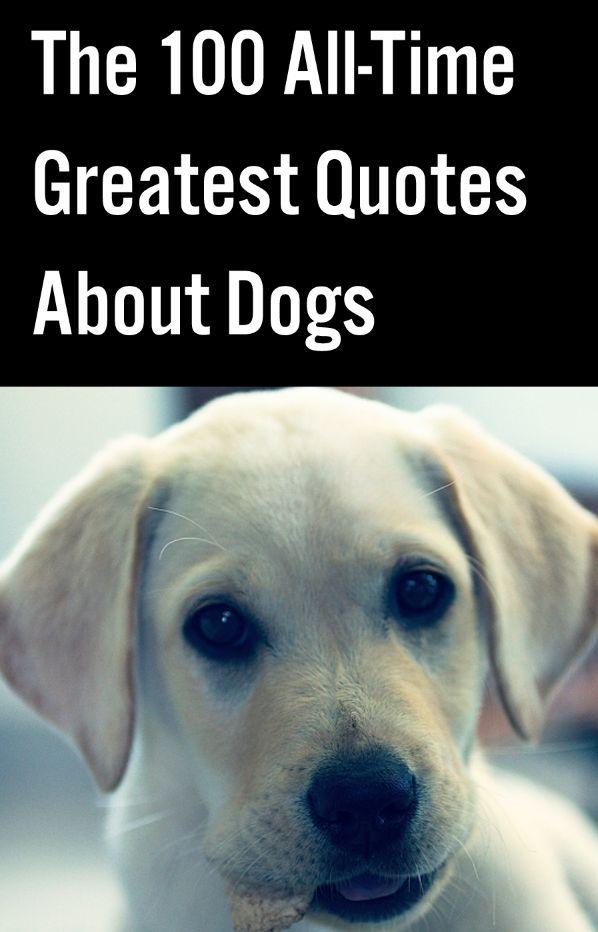 Best Quotes About Dogs on Pinterest Puppy quotes, Sweet dog quotes ...