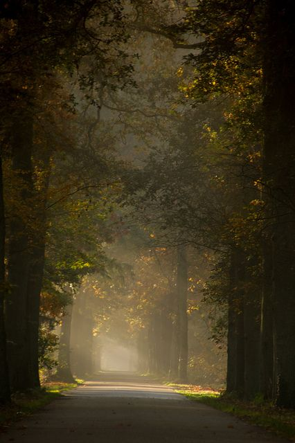 Autumn Forest - The Netherlands