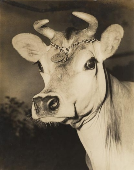 Borden's first Elsie the Cow at the 1939 New York World's Fair