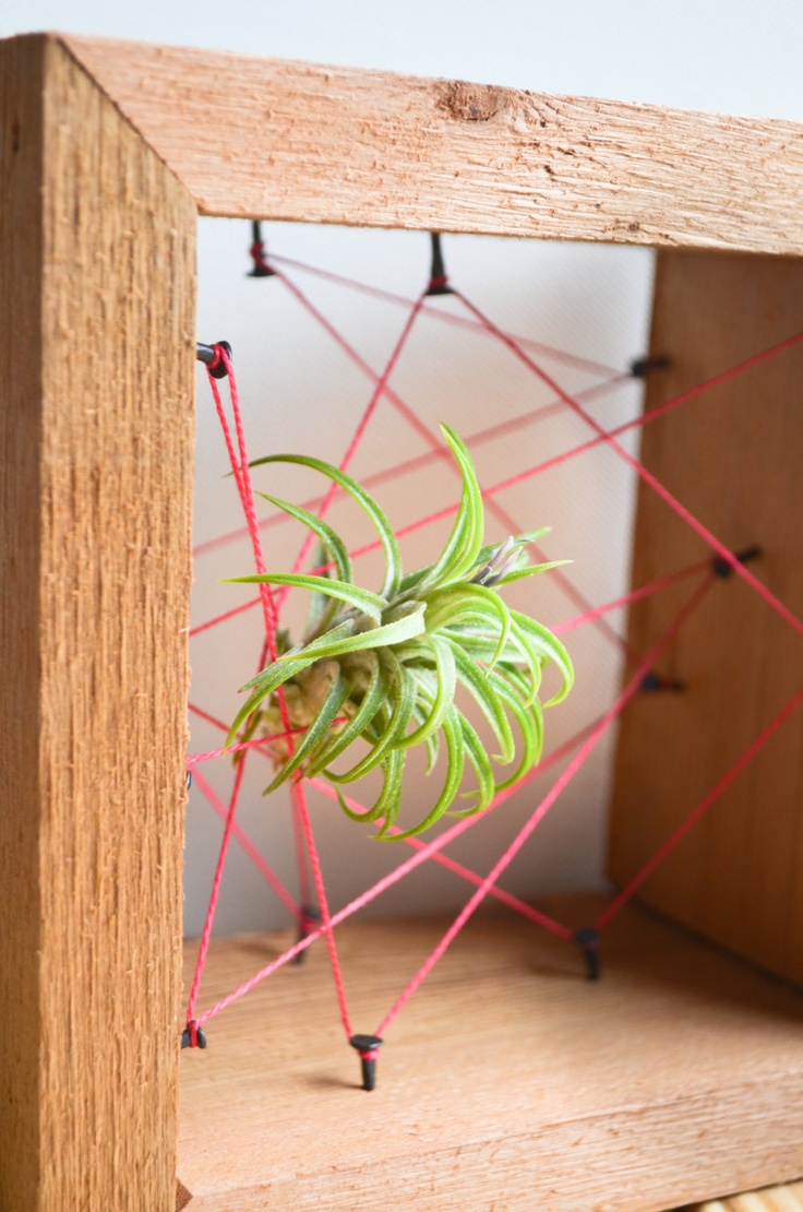 Neon pink air plant rustic reclaimed recycled salvaged for Air plant wall art