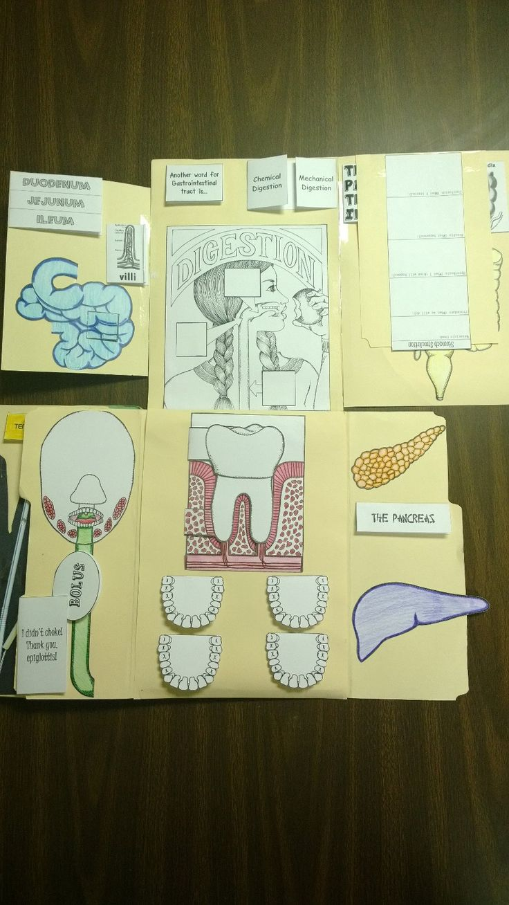 Anatomy coloring book for health professions - Here S Our Lapbook Monster Featuring Lesson 4 The Digestive System In Apologia S Exploring Creation