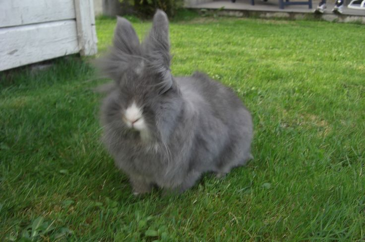 Stella the rabbit:) The wind is giving her a brand new hairdo ;)