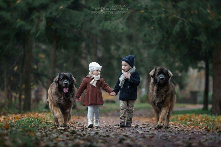 two children, two leonbergers