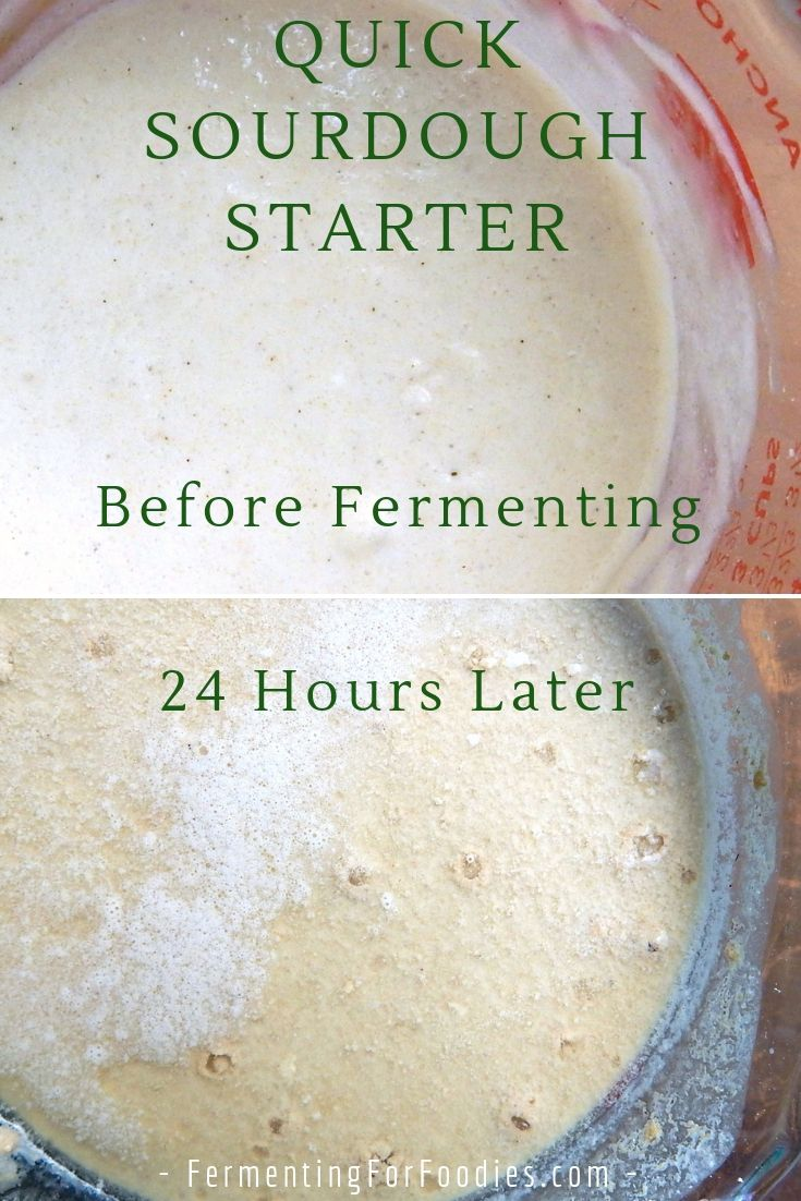 Quick and Easy Sourdough Starter