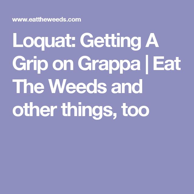 Loquat: Getting A Grip on Grappa | Eat The Weeds and other things, too