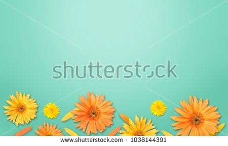 gerbera flower on green background