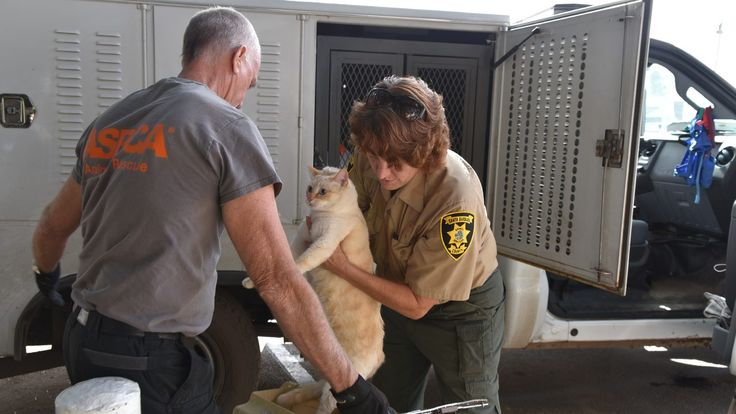 More than 1,000 animals displaced and lost following the deadly mudslides in Santa Barbara County have been rescued bySanta Barbara County Animal Services and the ASPCA.