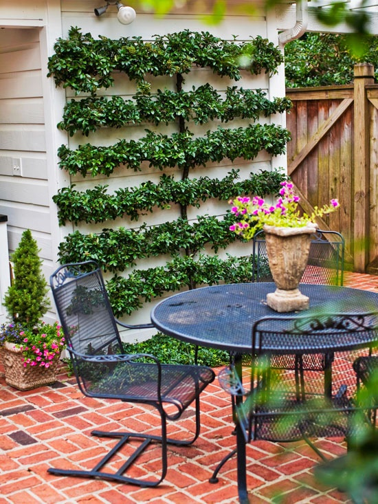 Espaliered shrub softens the wall on this patio!