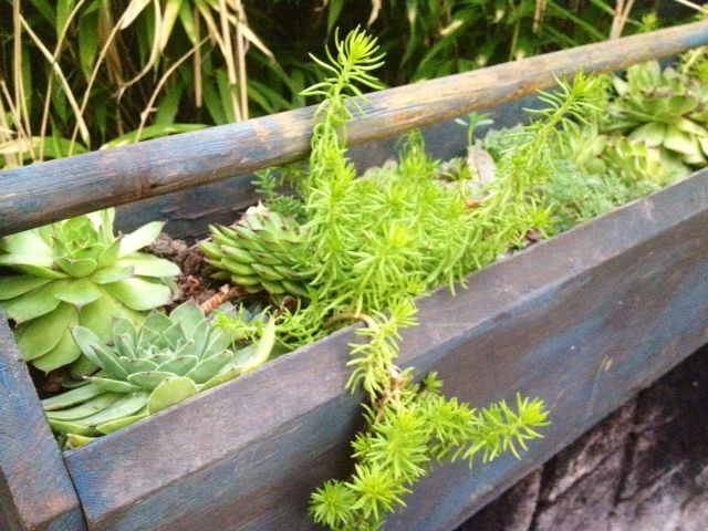 DIY How to Repurpose and Build a Succulent Box