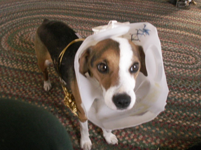 "Homemade ""cone of shame"" (worked like a charm!) Critters"