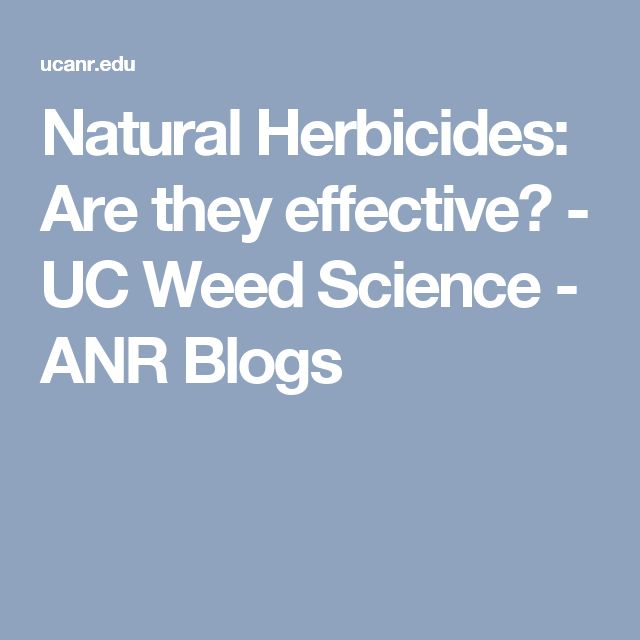Natural Herbicides: Are they effective? - UC Weed Science - ANR Blogs