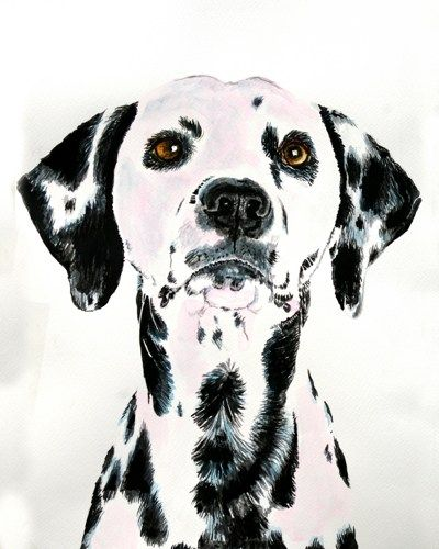 Dalmatian watercolor painting PRINT