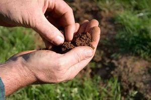 Soil Testing - International Ag Labs $25