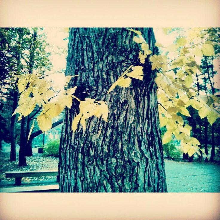 Tree bracelet by leafs