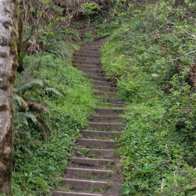 Indian Beach stairs in Trinidad CA