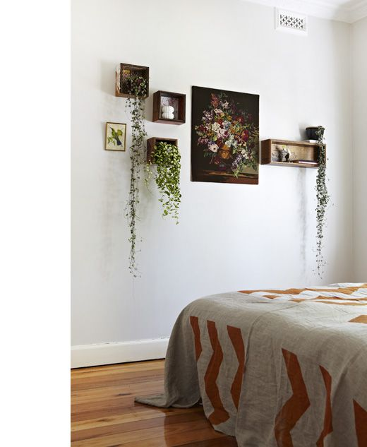 hanging plants in wall shelves