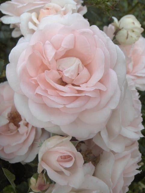 light pink.