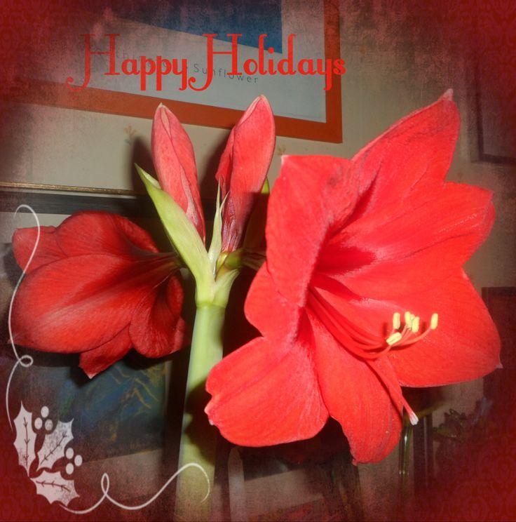 Merry Christmas, Happy Holidays, Happy New Year 2014.