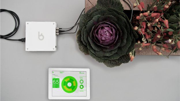 A New York based tech start up is currently developing a 'personal gardening assistant' that could eliminate any fear of weather when growing plants.The cloud based hydroponic gardening manger basically involves growing plants without soil, instead using a reservoir of nutrient solutions in water. The business is currently working on automating the system. I myself am not a gardener but I can see this working really well in cities where people may only have a small outside patio space.