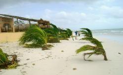 """""""After Photos """"  Hurricane Dean Ranchos Puerto Morelos Aug 2007 Yucatan Q Roo  Hurricanes tropical storms"""