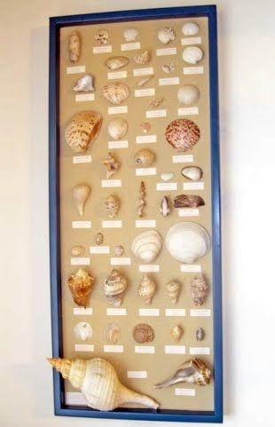 Shell Displays at Coquillage Cottage - Completely Coastal