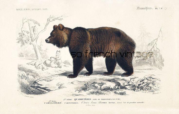 1861 Ours brun gravure ancienne Orbigny Original Qualité Exceptionnelle Histoire Naturelle Lithographie peinte à la main Singes Capucins de la boutique sofrenchvintage sur Etsy