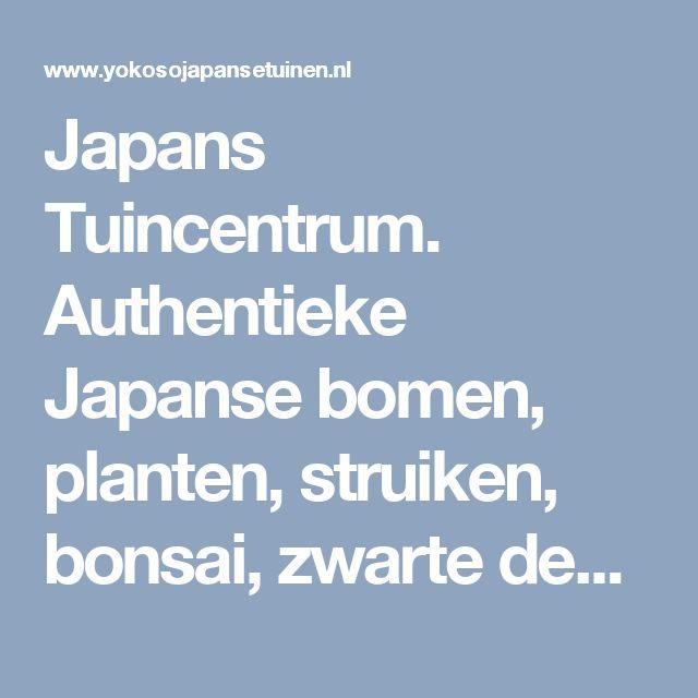 Japans Tuincentrum. Authentieke Japanse bomen, planten, struiken, bonsai, zwarte den, witte den, cryptomeria, pinus, taxus, enkianthus, Beplanting, Bomen, Struiken, Planten