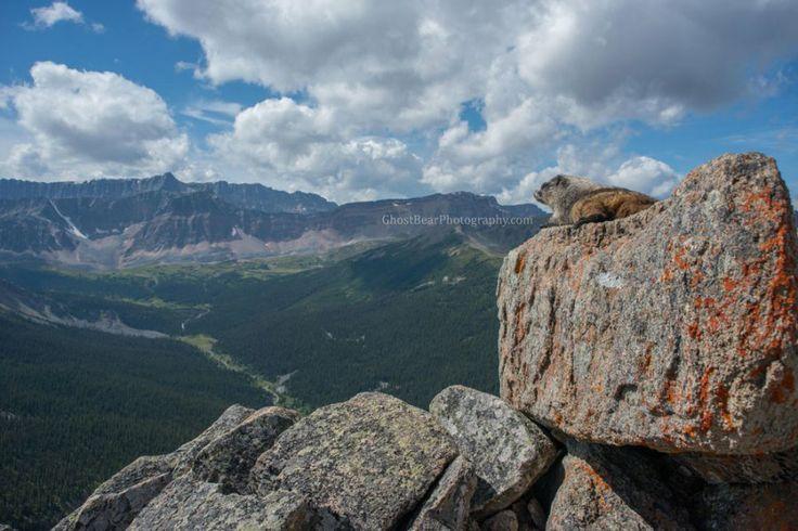 marmot over maligne lake ghostbearphotography.com