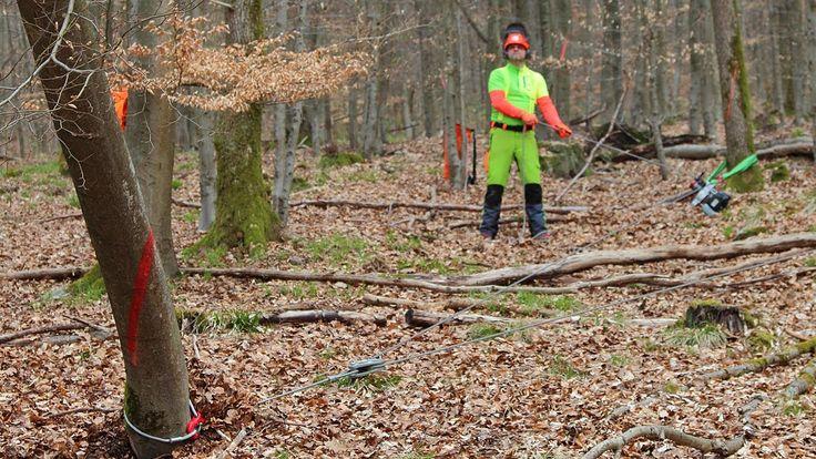 Bäume fällen - sicher und richtig! Teil 4: Hänger sicher zu Fall bringen