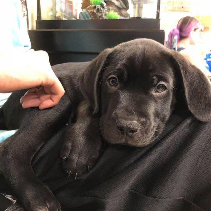 Milos Dog Rescue South Florida On Instagram We Have Lab Mix