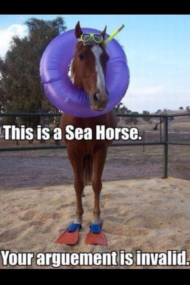 Horse jokes - photo#36
