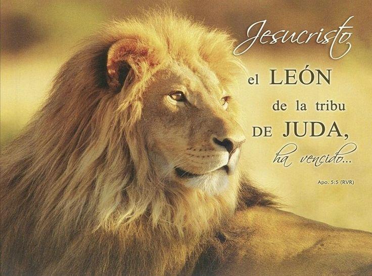 Mejores 38 imágenes de EL LEÓN Ď JUDAH ♥ en Pinterest   León de ...