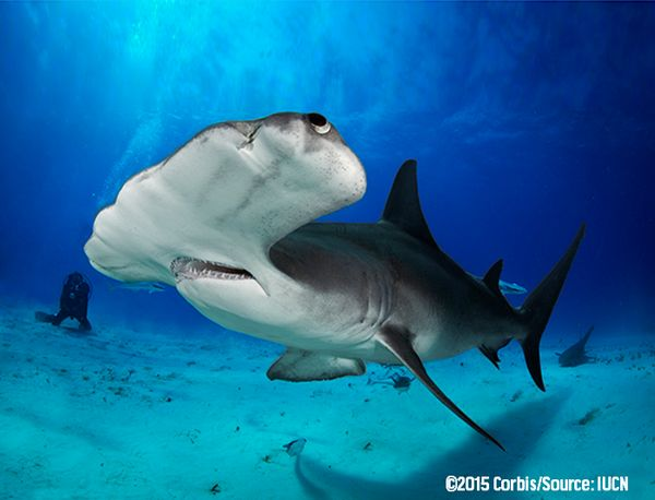 What are some of the biggest threats facing #sharks? http://oceana.org/blog/what-are-some-biggest-threats-facing-sharks… via @Oceana #SaveSharks