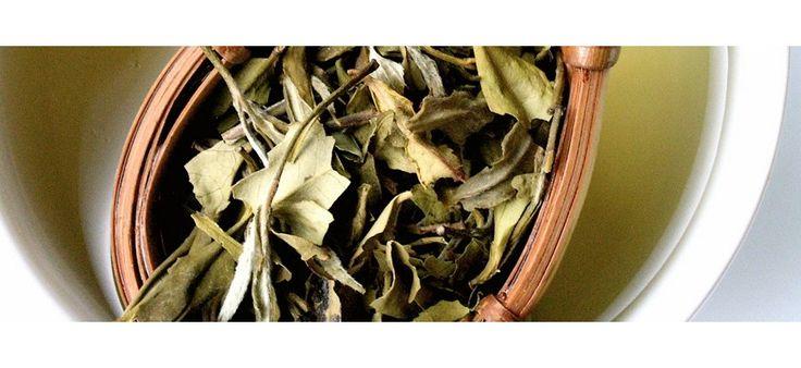 #Té Blanco. Gracias a su gran contenido de polifenoles, el té blanco es considerado como uno de los tés más antioxidantes. Esta variedad de té no posee fermentación por lo cual conserva todas sus propiedades. Además el té blanco es un potente coadyuvante para la producción de colágeno y elastina... | TeQuieroBio.com