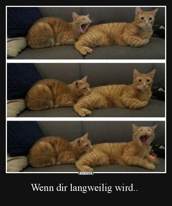 Wenn Sie sich langweilen ..   Lustige Bilder, Sprüche, Witze, echt witzig   – Humor