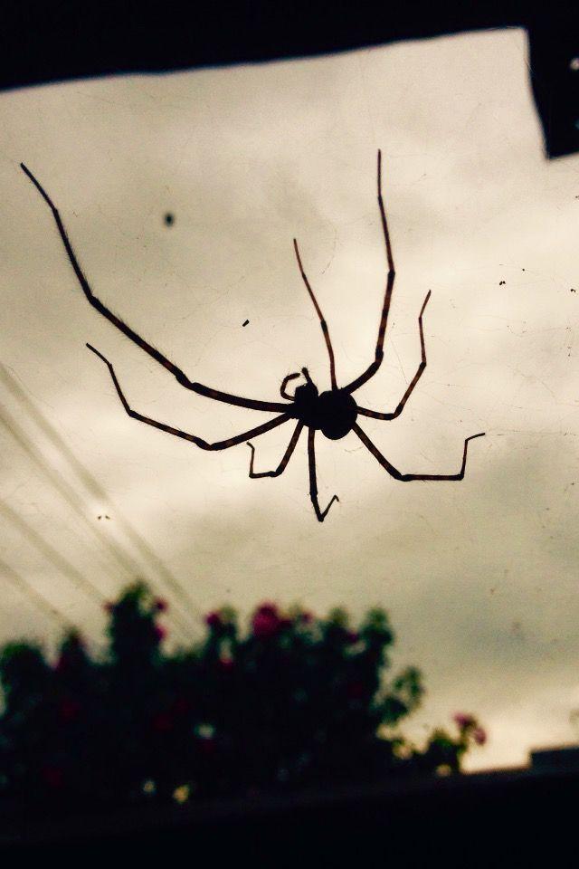 #amazing #spider #web #awesome #photography