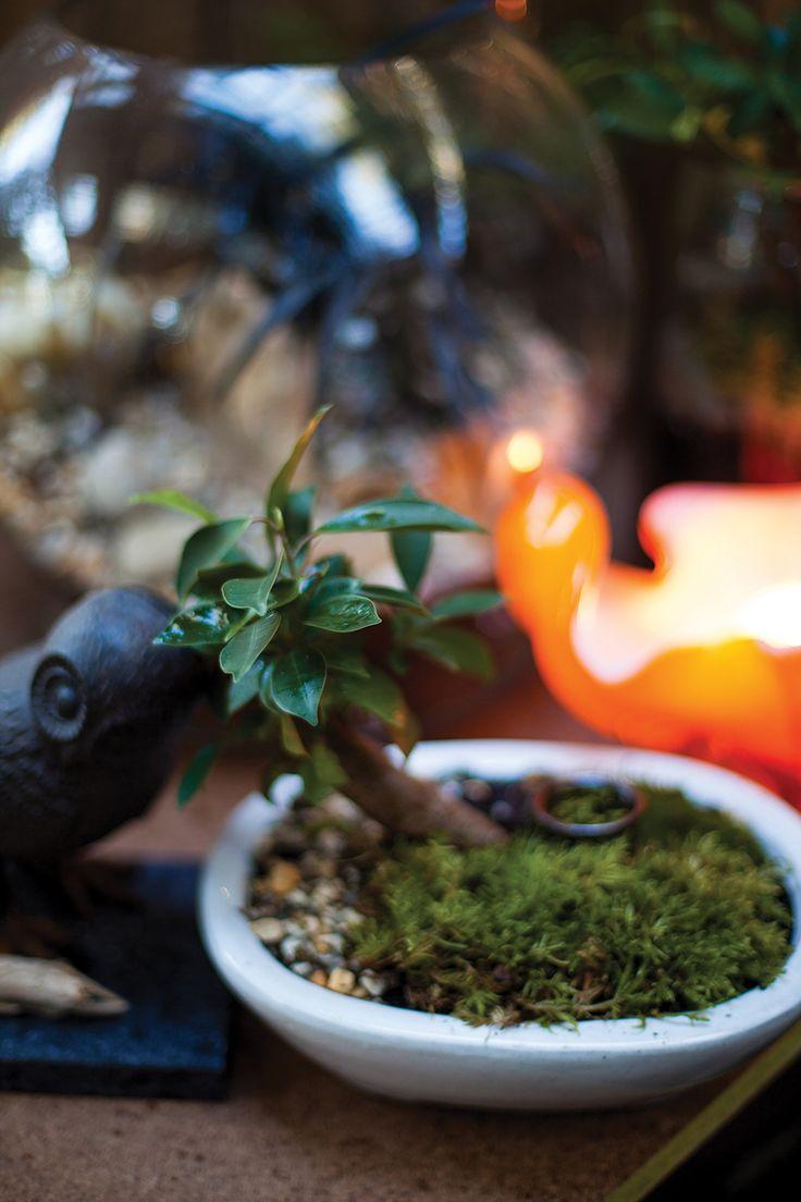 Miniature Gardens - www.essentialcountry.com.au