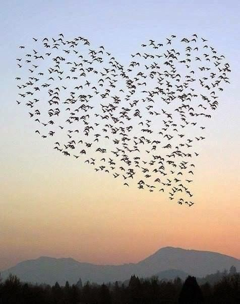 Heart made with birds in the sky how cool is this I love it