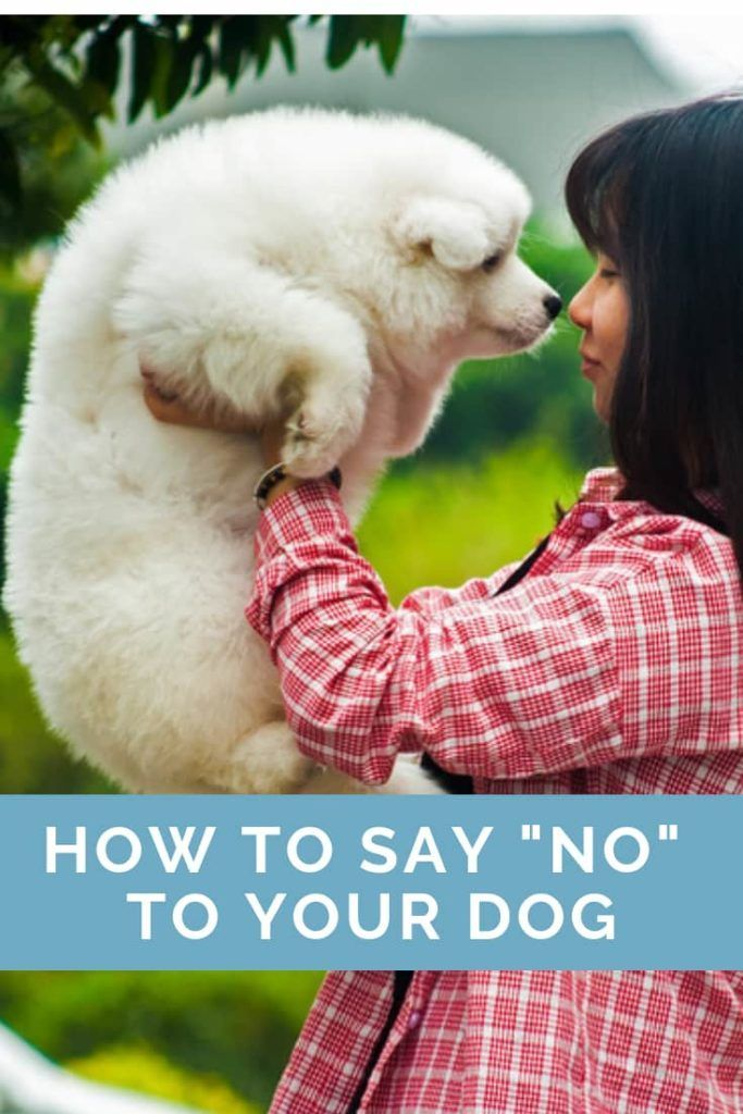 Saying No To Your Dog Dog Training Obedience Your Dog Dog